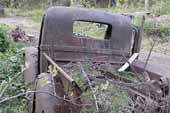 Restorable pickup truck project in classic car junk yard