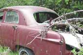 1950's Ford fordor sedan restoration candidate in vintage car salvage yard