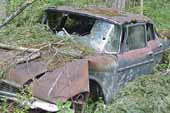 1950's Mopar 4 door sedan wreck, in vintage car salvage yard